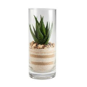 Sainsbury's Home Aloe Succulent In Glass Vase