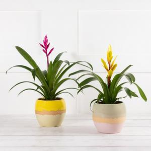 Bromeliad Ceramic